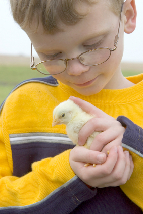 A young boy holds a baby chick