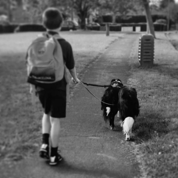 School boy walking two border collies