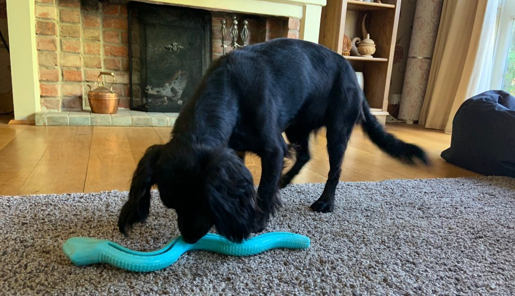 Dog eating food out of a food toy